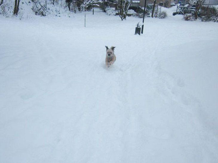 Spiel und Spaß im Schnee: Über die weiße Wiese jagen