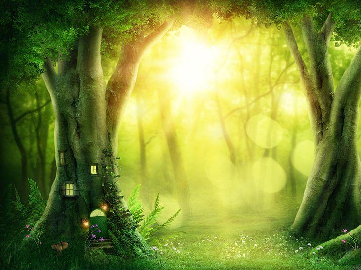 Die zauberhafte Welt der Feen & Elfen