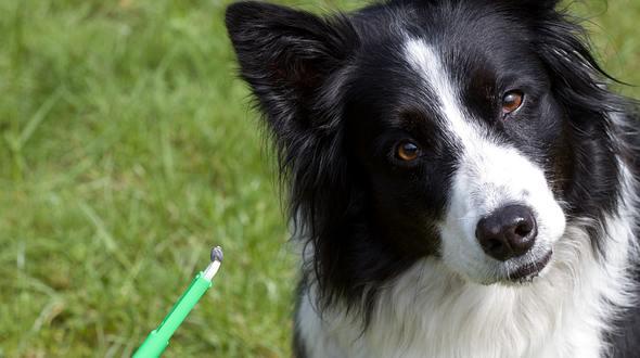 Zecke entfernen beim Hund: Das gibt es zu beachten