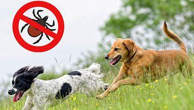 Natürliche Zeckenmittel für Hunde