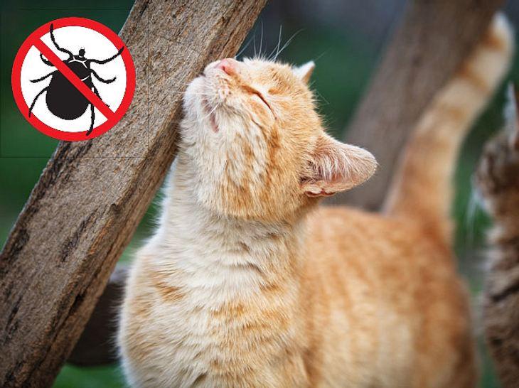 Zeckenmittel: Katzen mit natürlichen Mitteln gegen Zecken schützen