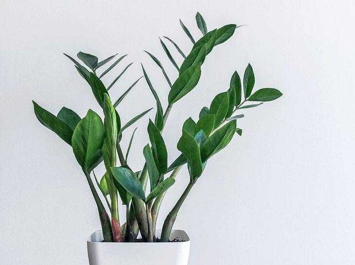 Welche Zimmerpflanzen brauchen nur wenig Licht?