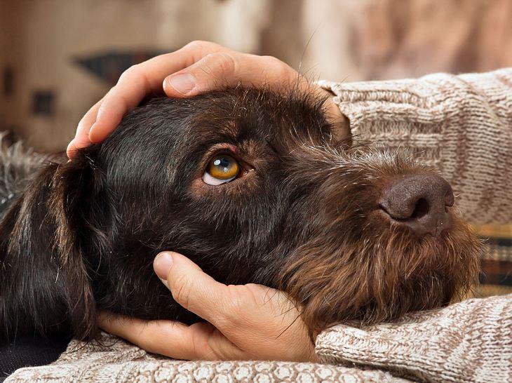 Haustier anschaffen: Ab wann bin ich zu alt?