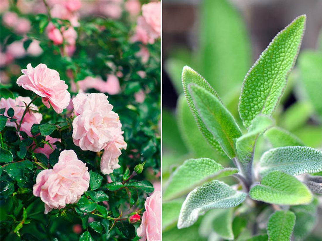 Wenn Sie Gewächse in Ihr Blumen- oder Gemüsebeet setzen wollen, sollten Sie auch über die Vorteile einer Mischkultur nachdenken.