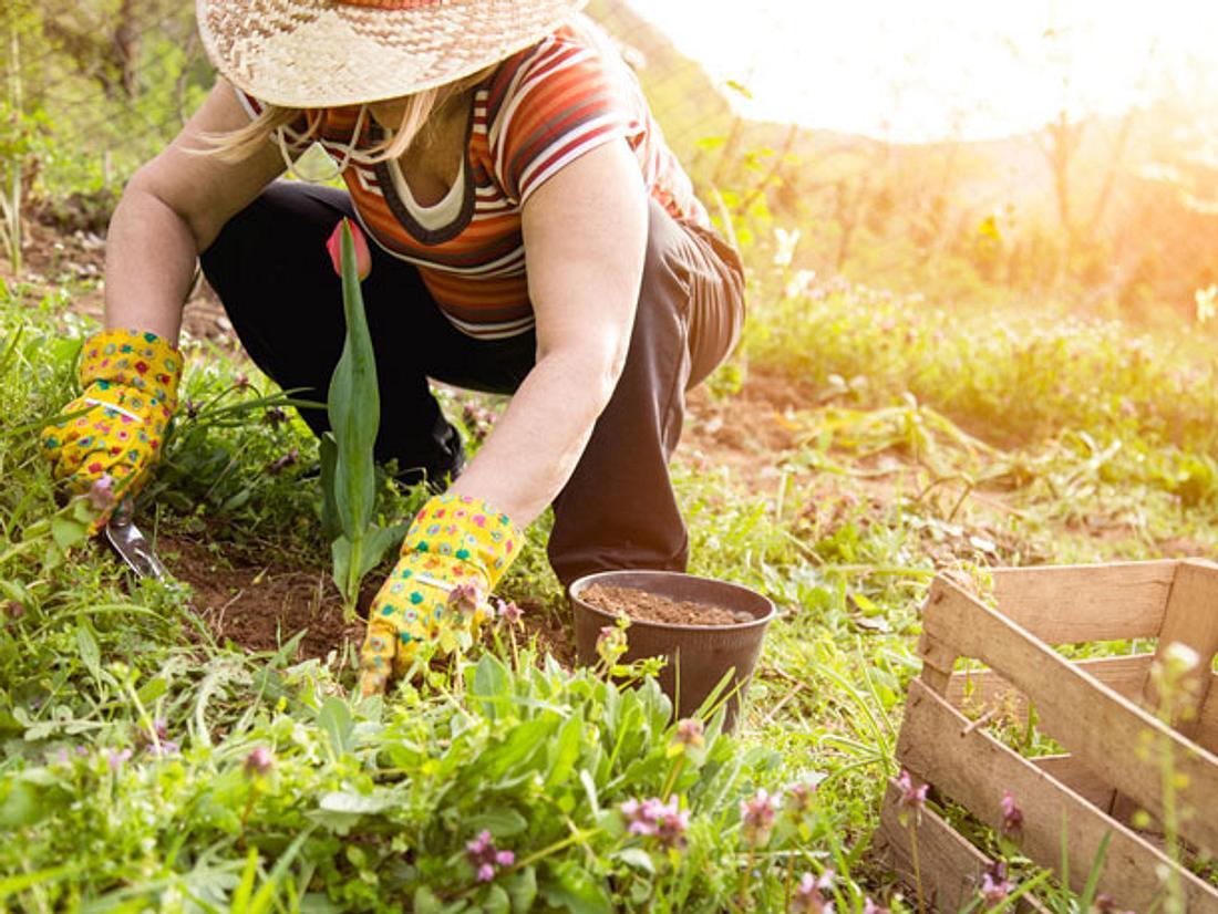 Es macht nicht nur Spaß, in der Erde zu wühlen, sondern Gartenarbeit ist auch gut für Ihre Gesundheit.
