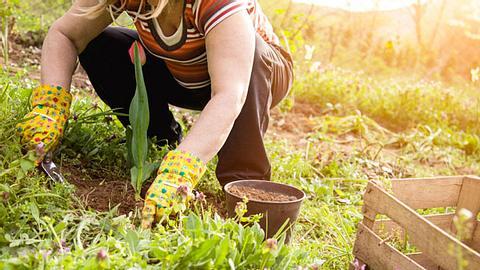 Es macht nicht nur Spaß, in der Erde zu wühlen, sondern Gartenarbeit ist auch gut für Ihre Gesundheit. - Foto: Milan_Jovic / iStock
