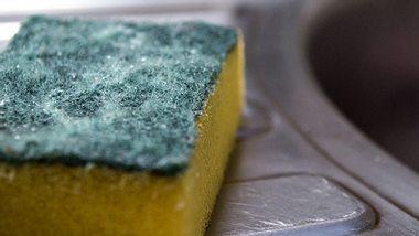 Küchenkeime - Foto: NuStock / iStock