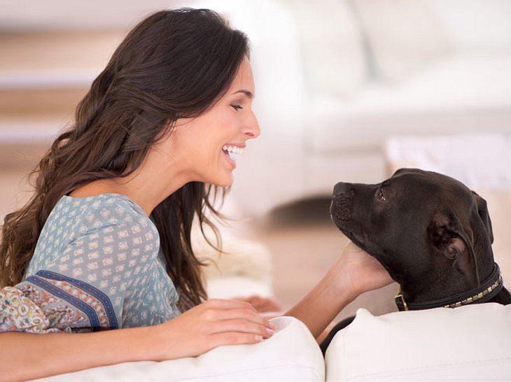 Manchen mag es vielleicht kindisch vorkommen, wenn Haustierbesitzer mit Hund und Katze sprechen - doch Experten sagen, dass dieses Verhalten sogar ein Zeichen von Intelligenz ist.