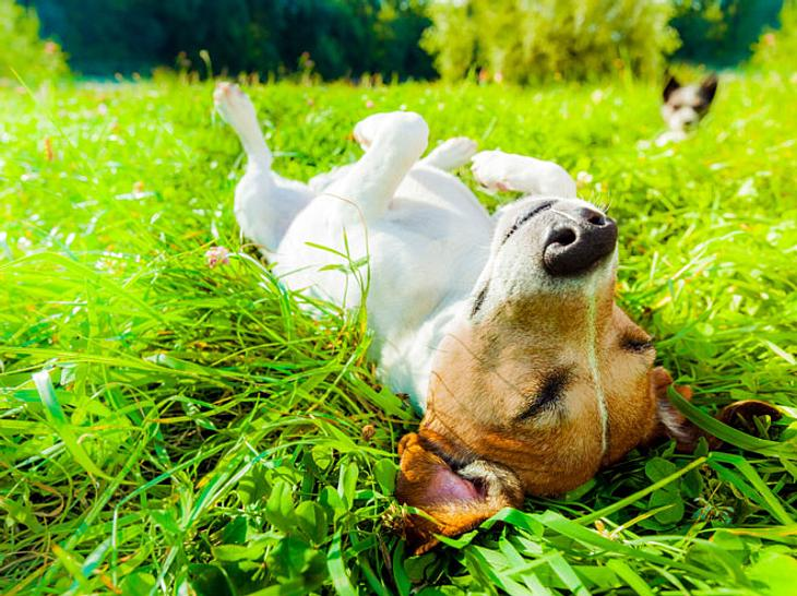Auch für Hunde sollten Sie Sonnencreme im Haus haben.