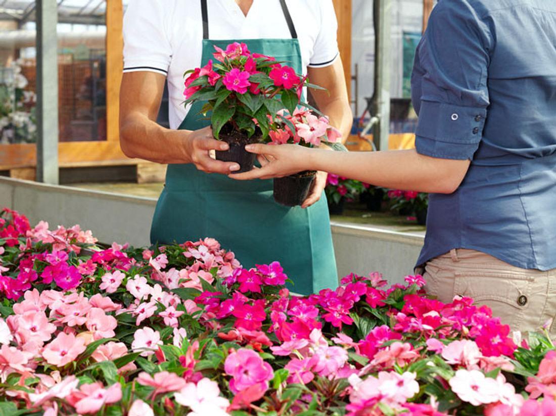Wenn Sie Pflanzen kaufen, sollten Sie immer auf gute Qualität achten.