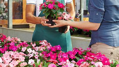 Wenn Sie Pflanzen kaufen, sollten Sie immer auf gute Qualität achten. - Foto: diego_cervo / iStock