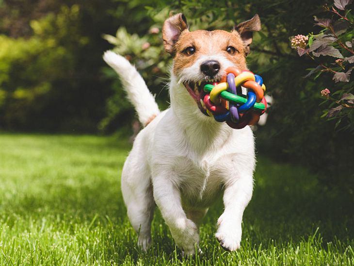Hundespielzeug können Sie ganz einfach selber basteln.