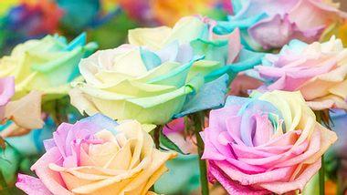 Regenbogen-Rosen selber machen